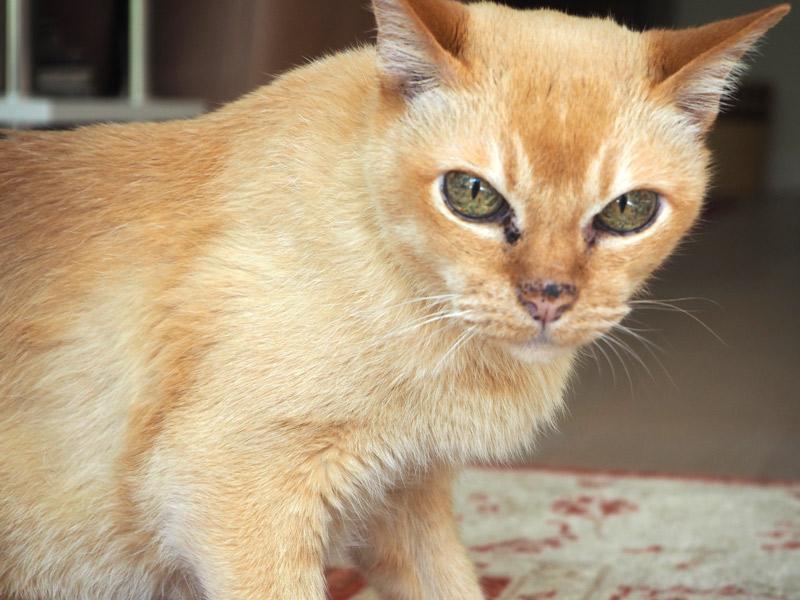 Hilfe für ältere Katze mit Verstopfung