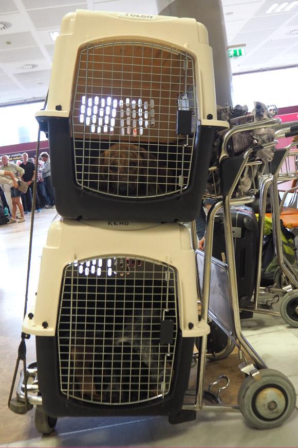 Hunde: Transport im Flugzeug