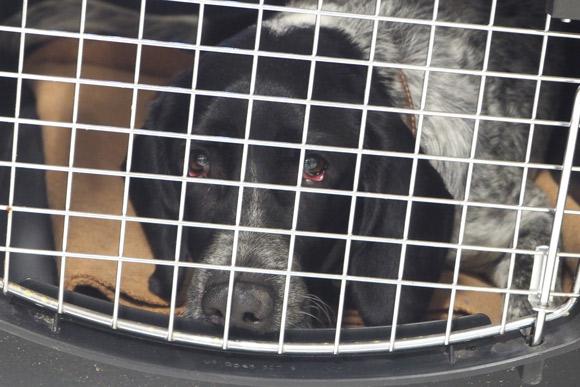 Soll dieser Hund von Teneriffa nach Deutschland gebracht werden?