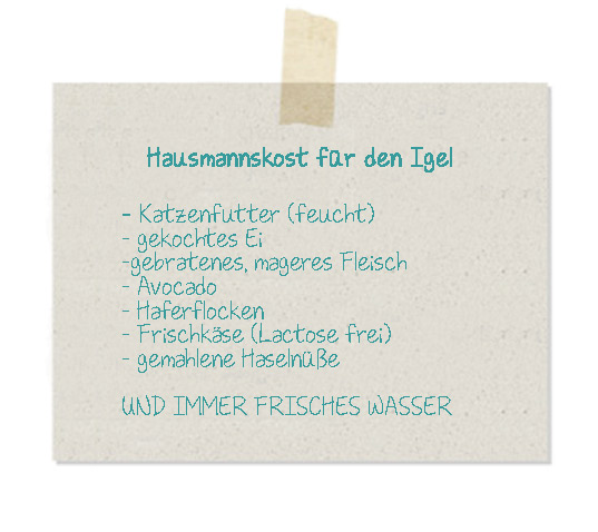 Igel-Hausmannskost