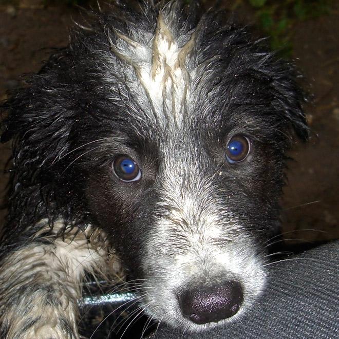 Auch vom Baden können Hunde Halsschmerzen bekommen
