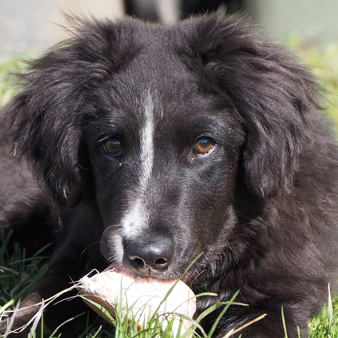Hund mit Mandel- und Rachenentzündung