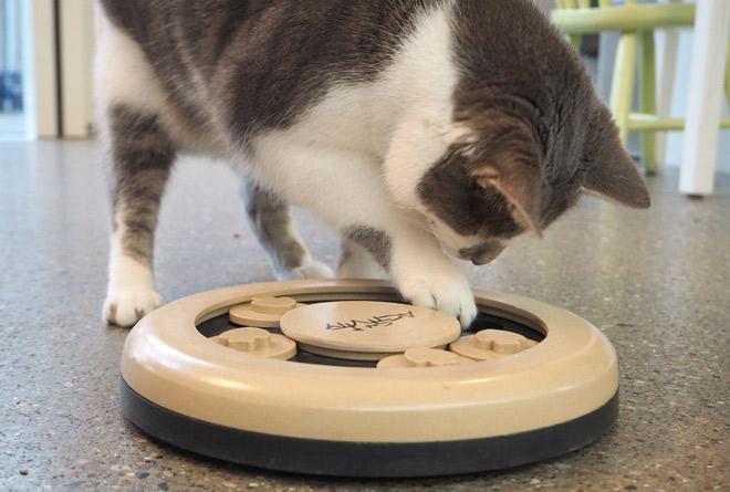 Katzenspielzeug zum Abnehmen