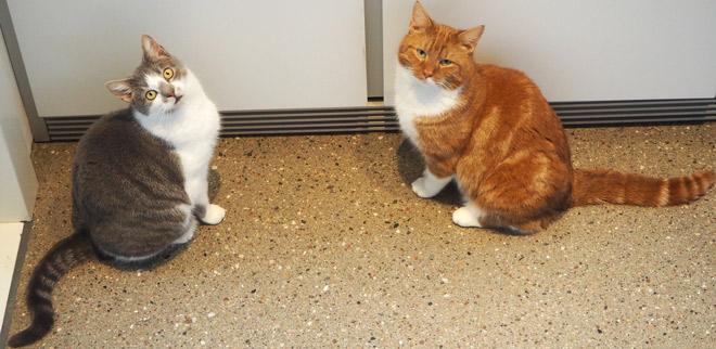 zwei hungrige, bettelnde Katzen