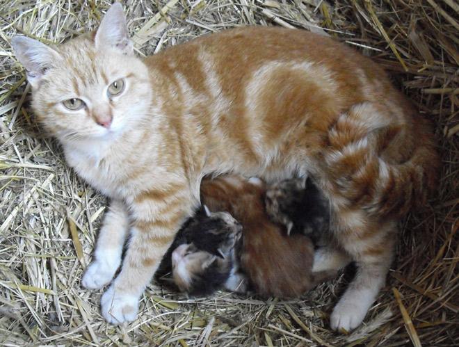 Ungeimpfte Katzen ohne Felines Fibrosarkom