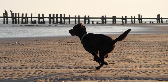 Kastrierter Hund ohne Hormone