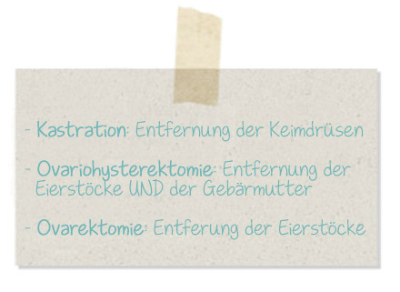 Kastration, Ovariohysterektomie, Ovarektomie