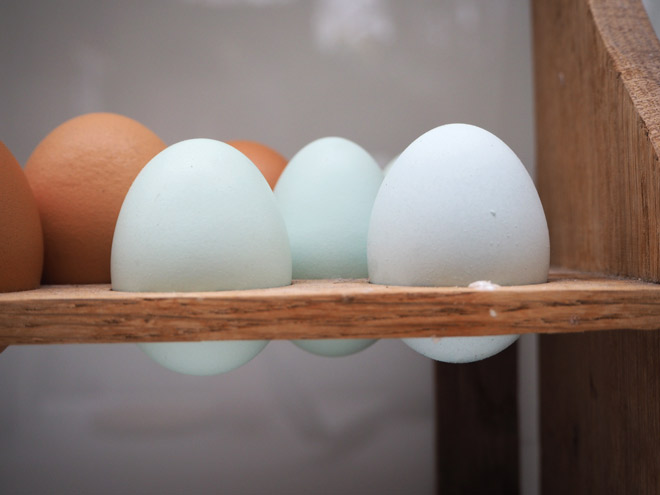 Grünleger-Eier - keine Windeier