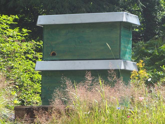 Wabe mit Brut, Pollen und Honig