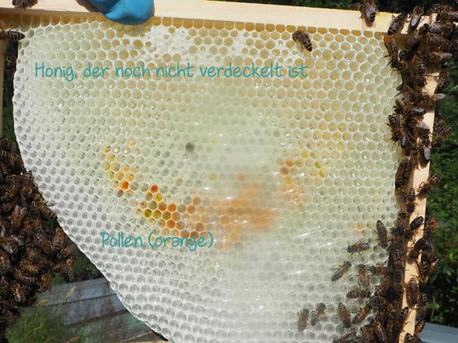 Hier hat die Bienenkönigin leider noch keine Eier gelegt