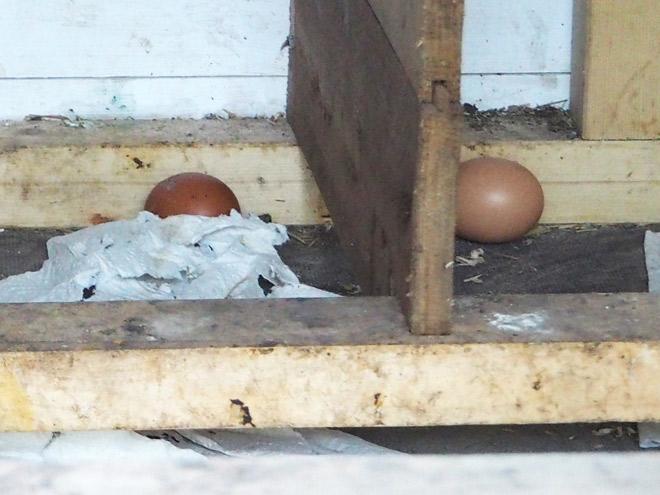 Eier im leeren Nest