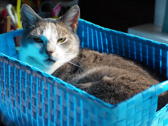 Diese Katze markiert glücklicherweise nicht mit Harn