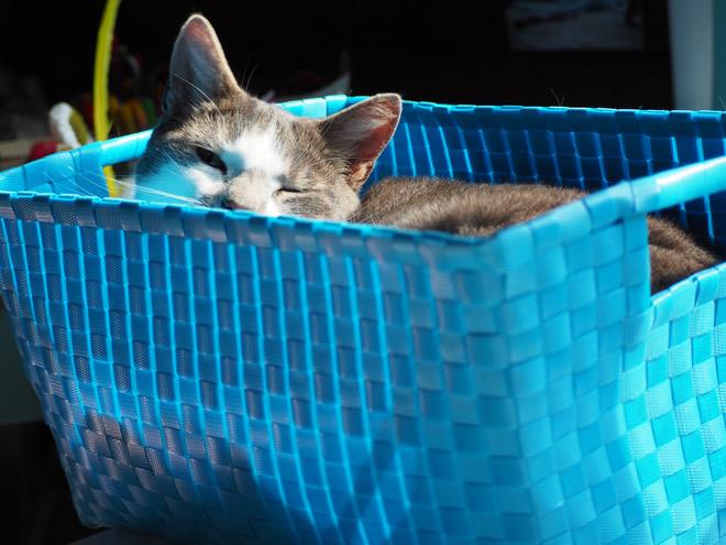 revierverhalten bei katzen