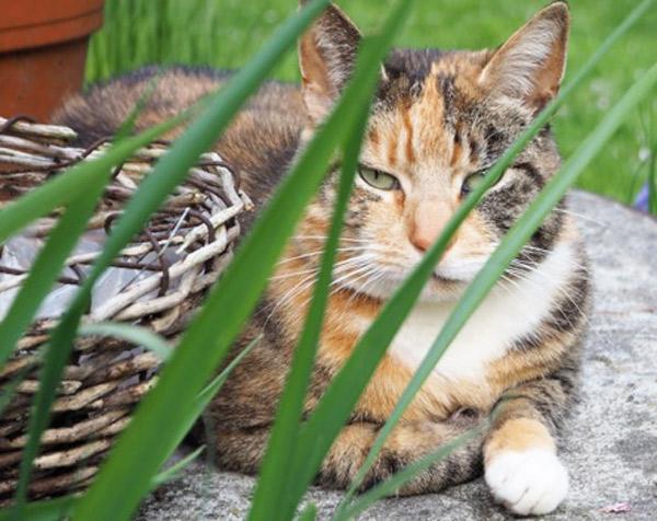 Katze mit FORL
